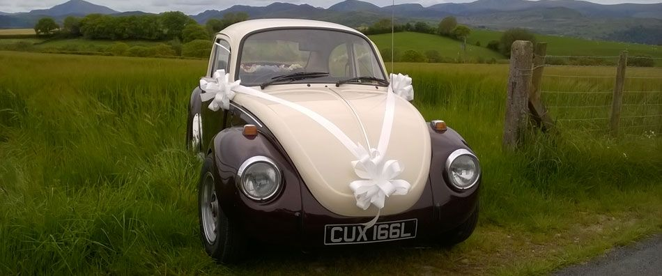 Bug in the Grass - Our very own 'Love Bug', equally at home in the town and the country